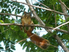 Photo of the Squirrel at 10^-10 seconds before combustion.